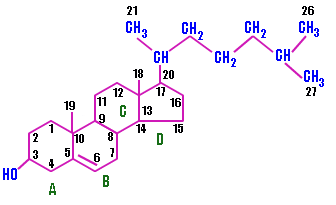 Structure And Functional Differences Between Hdl And Ldl